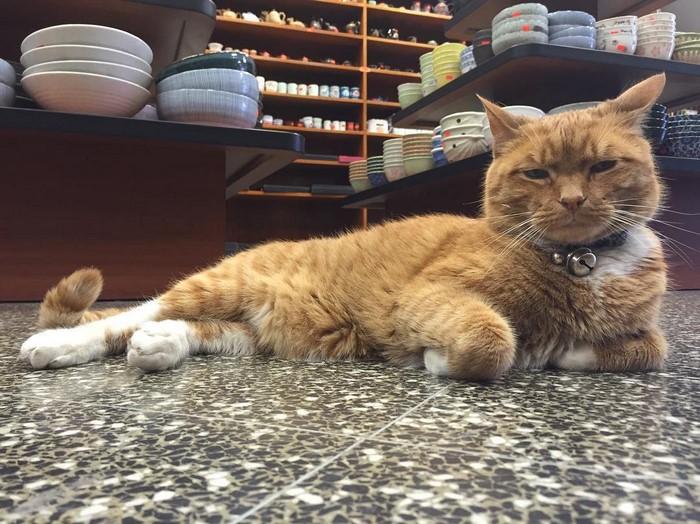 ginger-cat-store-owner-newyork-26