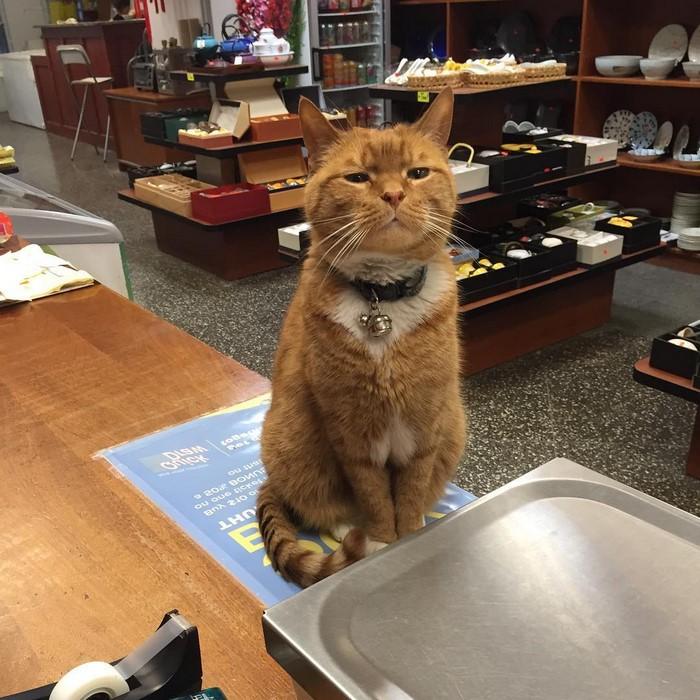ginger-cat-store-owner-newyork-28