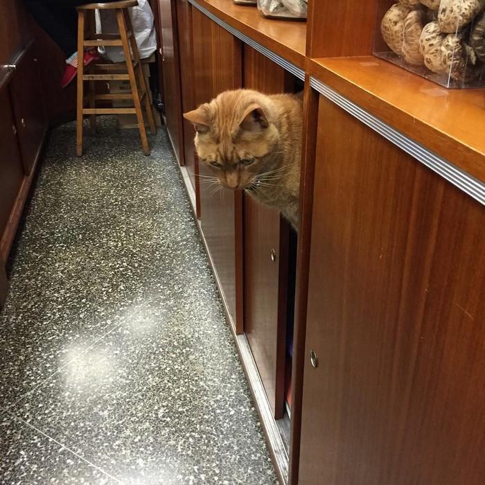ginger-cat-store-owner-newyork-36