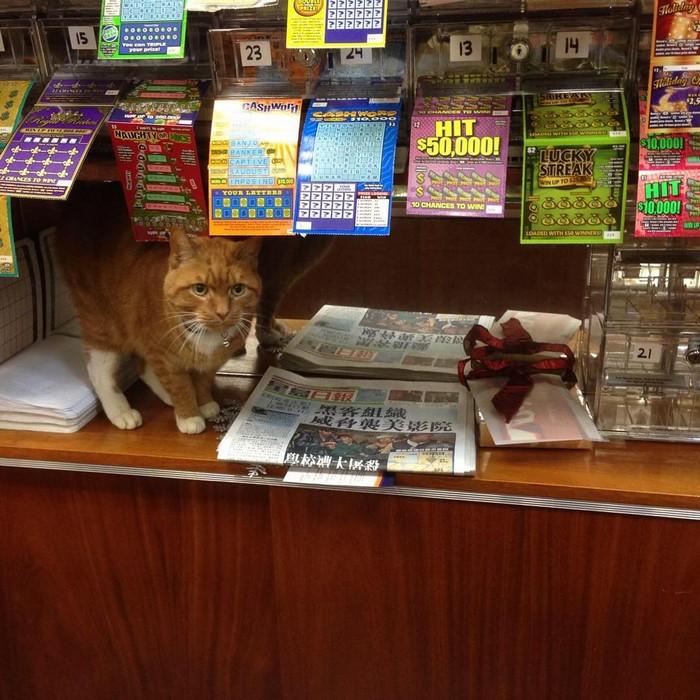 ginger-cat-store-owner-newyork-45
