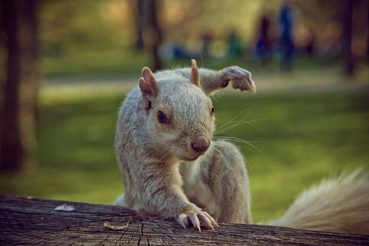 squirrel-1024x683