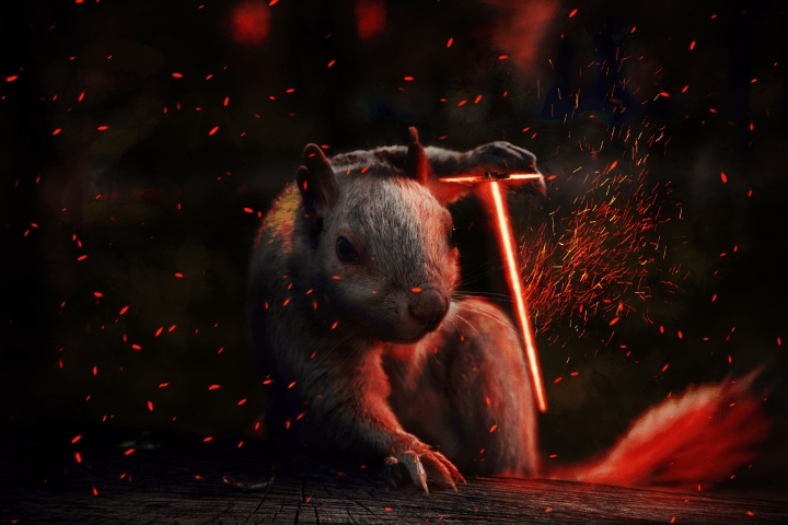 squirrel1-1024x683
