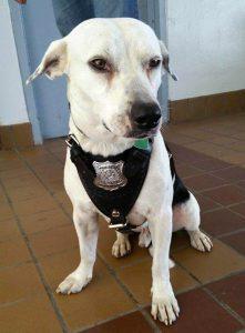 gorgi-perro-adoptado-comisaria-5
