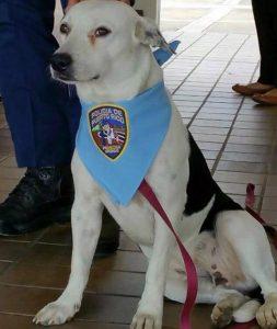 gorgi-perro-adoptado-comisaria-7