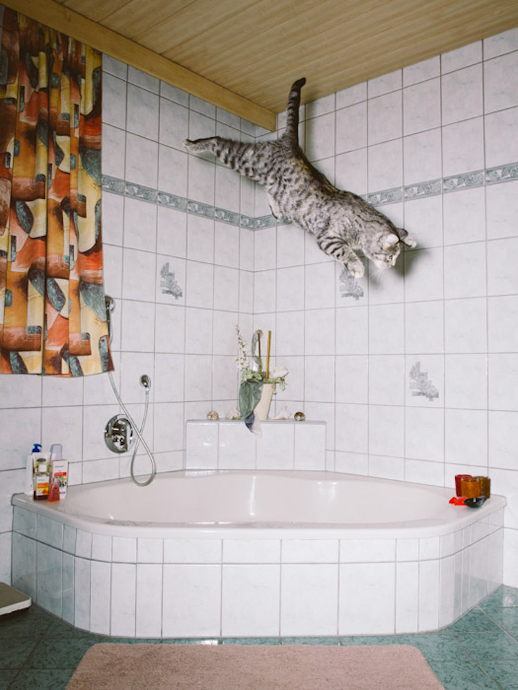 04_catcal_gebhart_de_koekkoek
